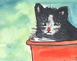 ACEO Kitten In A Red Bucket
