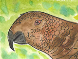 ACEO POLLY PARROT
