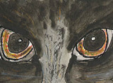 ACEO Cats Eyes