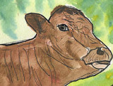 ACEO BULL Watercolour, pen and ink
