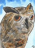 ACEO OWL FACE now SOLD