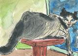ACEO CAT NAP