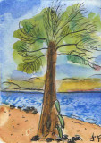 ACEO Palm Tree On Sandy Beach