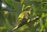 Yellow warbler bug.jpg