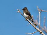 Bird 02.jpg
