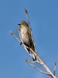 Bird 03.jpg