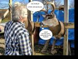 Deer and Julie 2 S.jpg