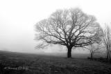 A tree I know