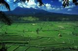 Rice Fields under Volcano