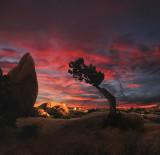 Joshua Tree Park CA