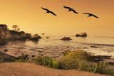 Shell Beach CA