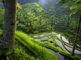 Terraces near Ubud