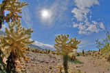 The Cholla Garden