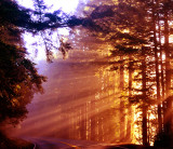 Humboldt County Redwoods