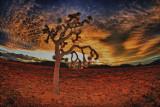 Fiery Sunset over Joshua Tree Park