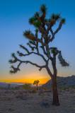 Sunset on Joshua Tree Park