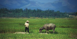 Farmer with his Water Buffalo