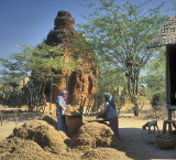 Bagan Farm