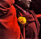 Monk with Carnation