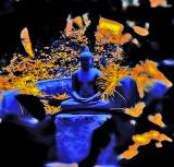 Buddha PhotoArt