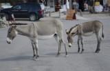 Street life in Oatman