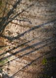 48 grass shadows