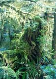 4 Forest Spirits 3
