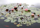 18 lily pond 05