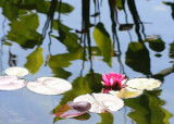 40 lilypond reflections