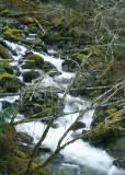 13 carbon creek