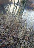 16 winter grass
