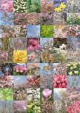5 spring quilt