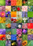 6 summer quilt
