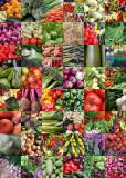 1 veggie quilt
