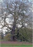 25 - a very big tree...