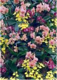 27 orchid extravaganza