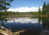 05 wild lily lake