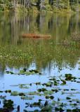 12 howell lake