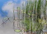 20 pond plants