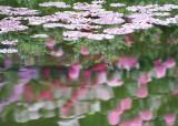 27 pond leaves, rhody reflections