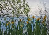 06 greenlake irises
