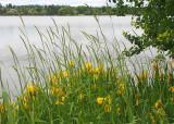 05 lakeside irises