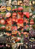 10 mushroom quilt