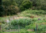 37 view of garden plots