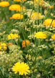 29 garden flowers