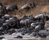 Gnus cannot jump over mountains