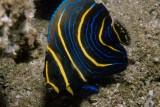 Costa Rica - Golfo do Papagayo