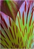 G_WagonerR_Petals.jpg