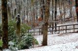 Snow Shots Guest