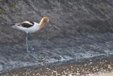 part 2 of  our wild bird gallery